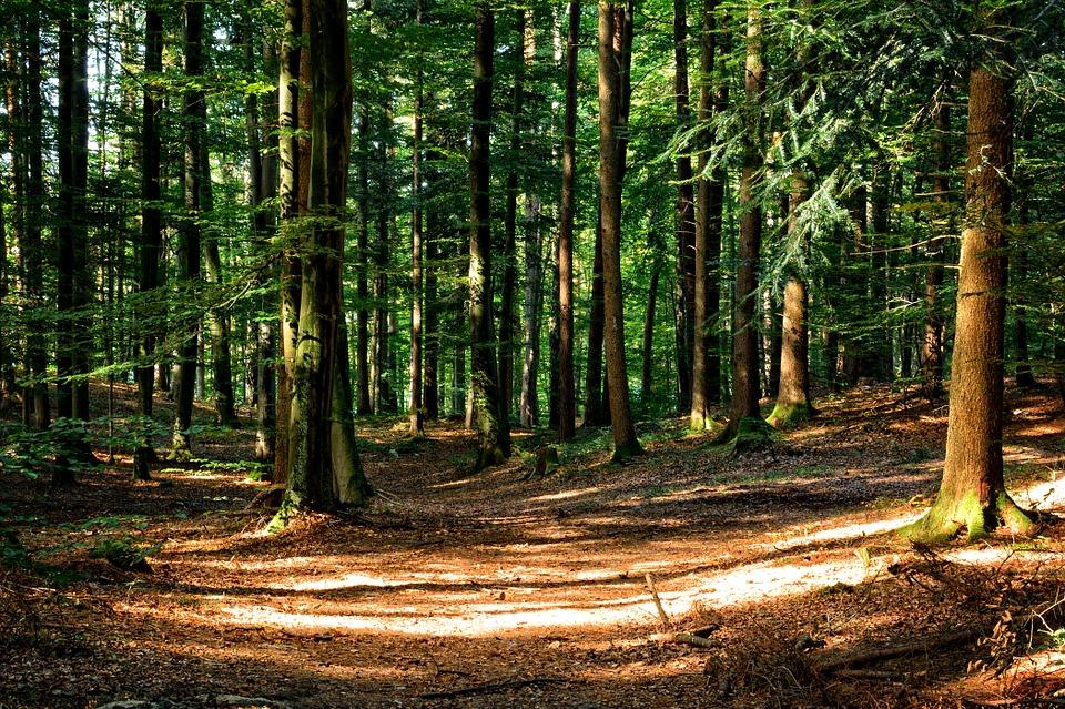 mito bosque