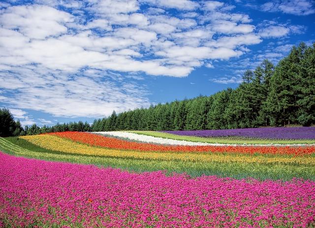 teoria del color flores